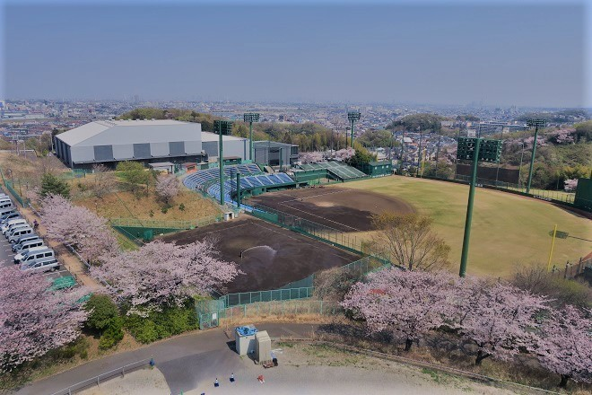 2019 よみうりランドの桜(3)