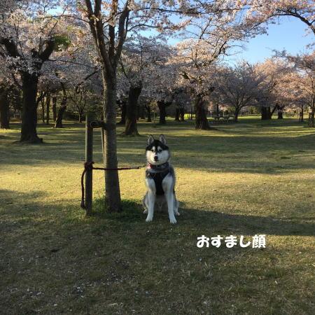 2019-04-13-3.jpg