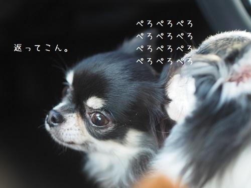 P3090072.jpg