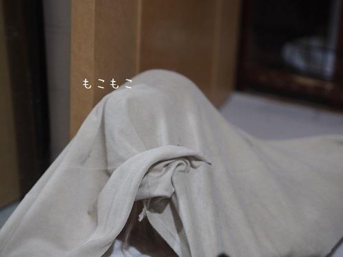 P7210010.jpg