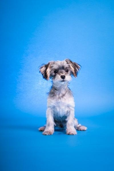 dogs-18_201901281049539a7.jpg