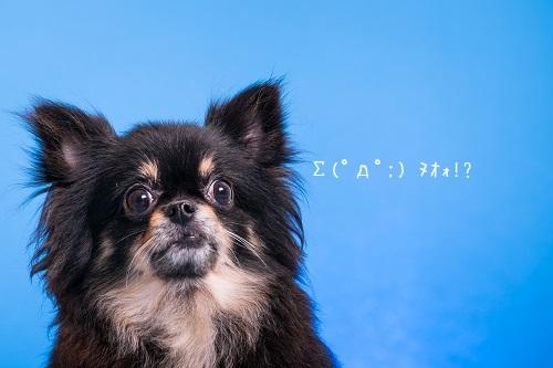 dogs-20_2019012810264658b.jpg
