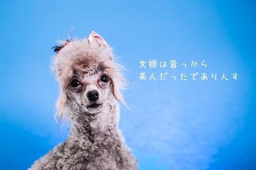dogs-25.jpg