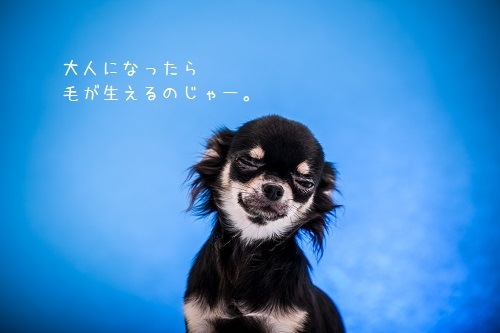 dogs-29.jpg