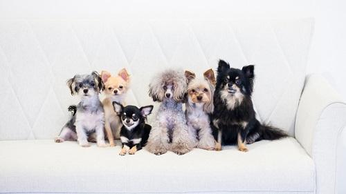 dogs-42_201901312040163e0.jpg