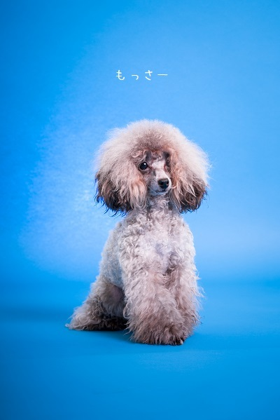 dogs-6_201901281026431a8.jpg