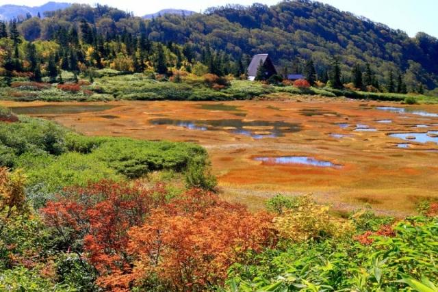 ベネシード 高知池湿原・天狗の庭