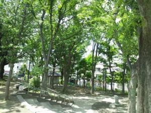 midoriの多い街