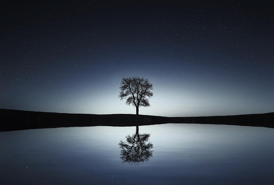 tree-736881_960_720.jpg