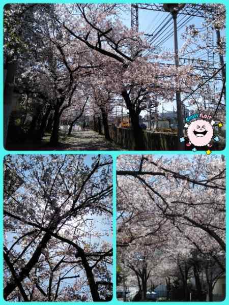 19-04-09-16-45-54-525_deco_20190409165637.jpg