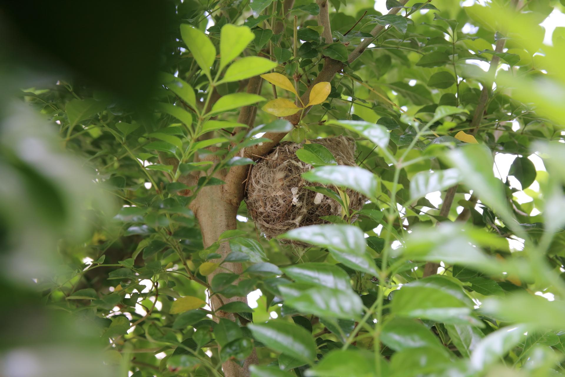 20190503鳥の巣00000371