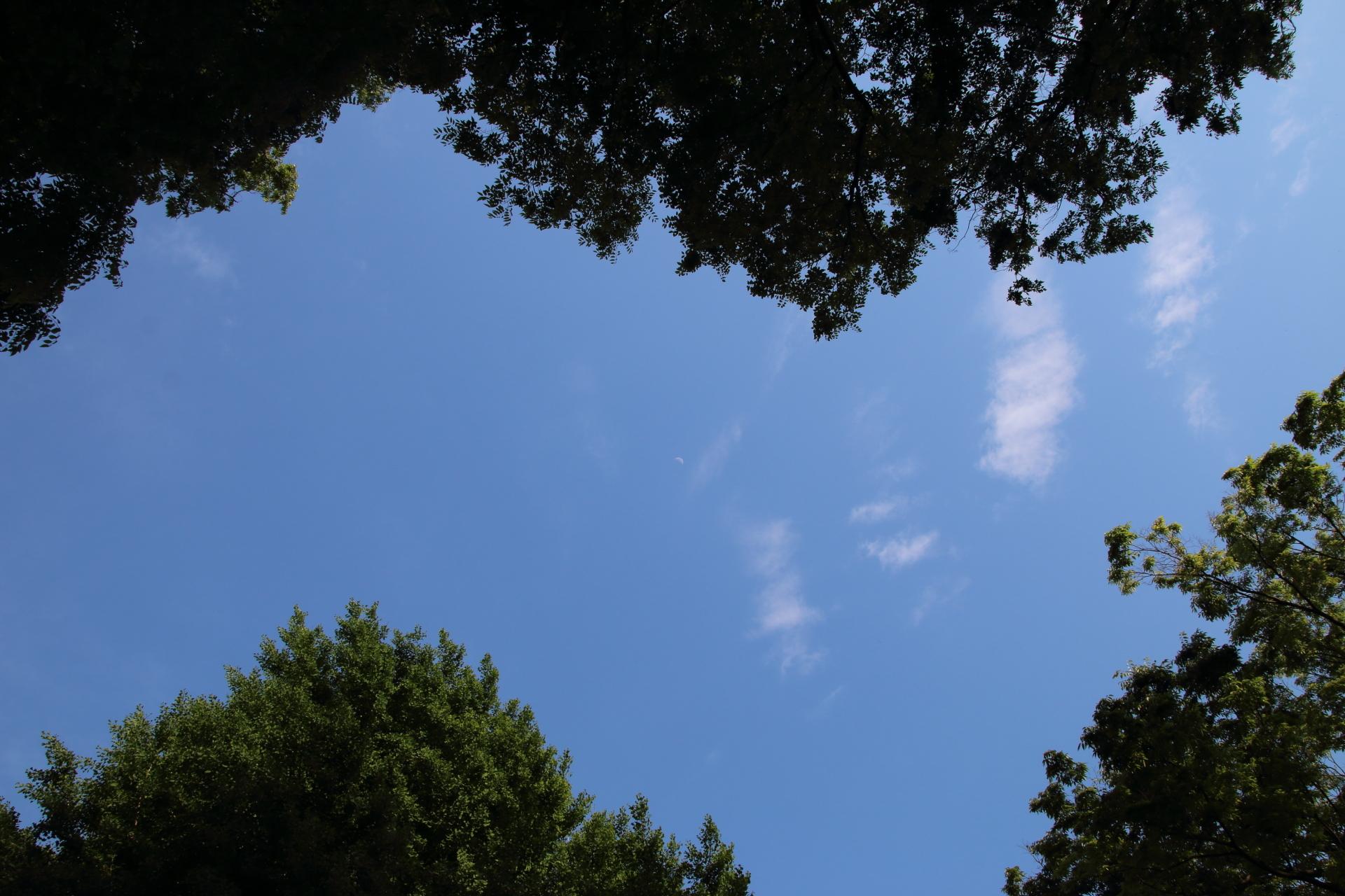 20190511雲00000422