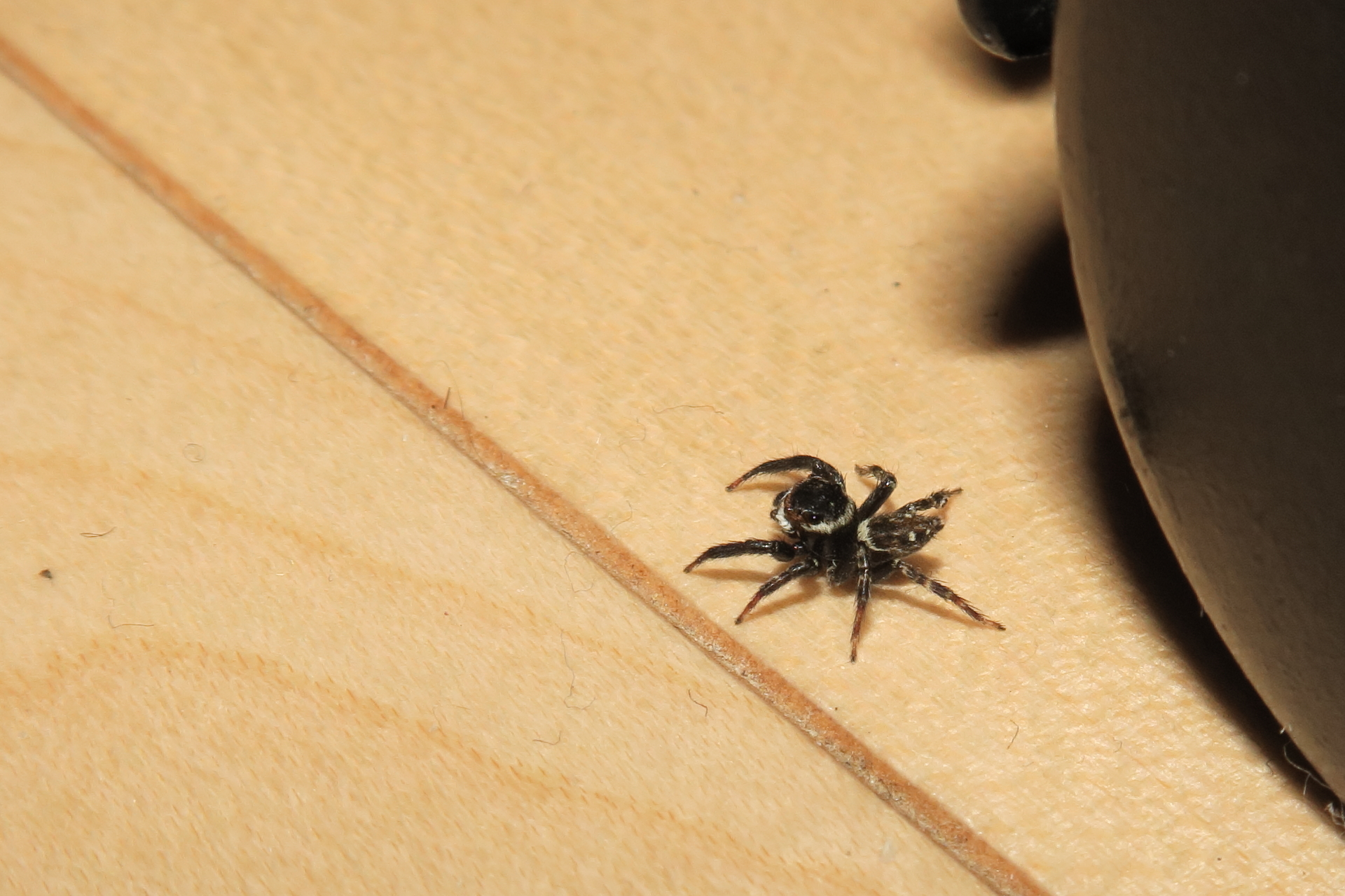 今日のクモ