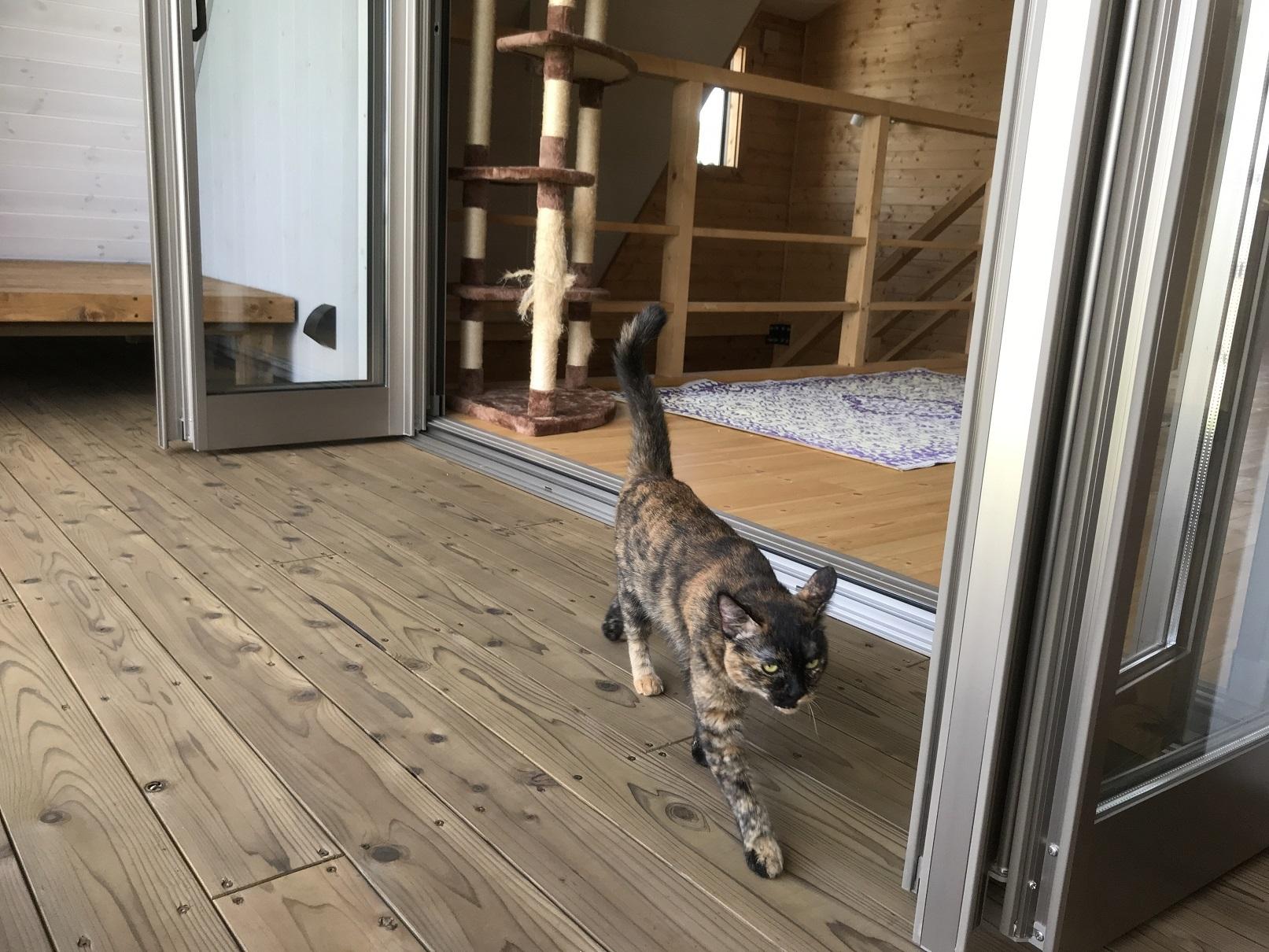 猫の引っ越し (2)