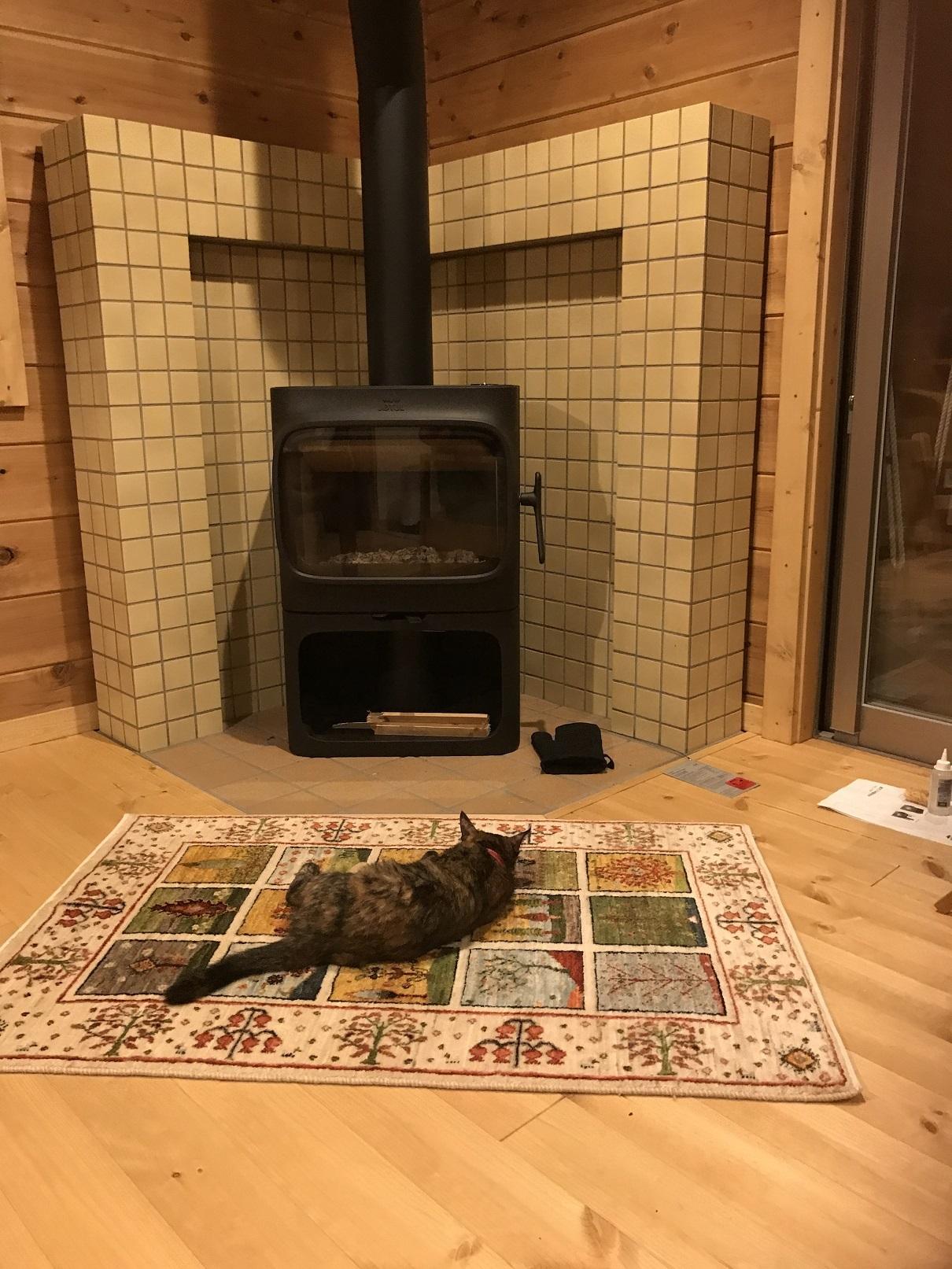 猫引っ越し (2)