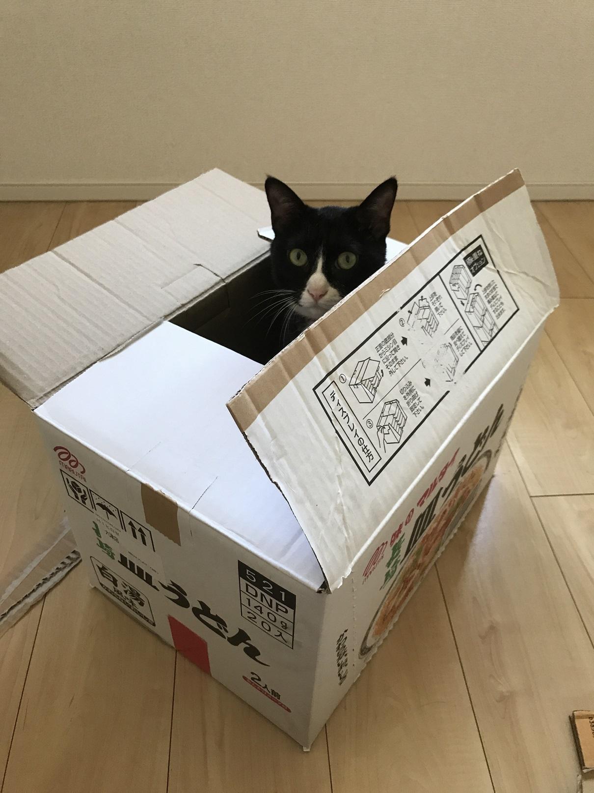 猫引っ越し (1)