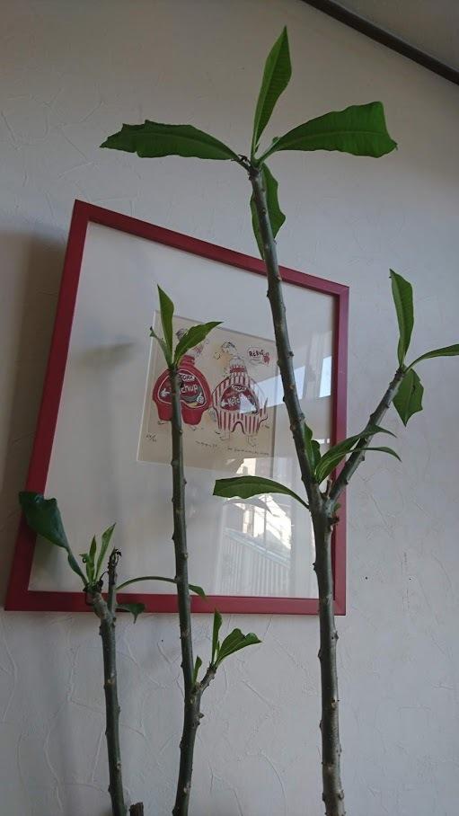 越冬真っ最中の植物ですが