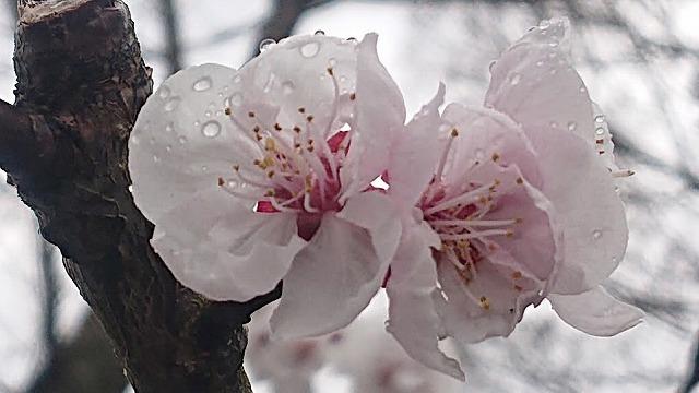武田薬品の薬用植物園 春ー2