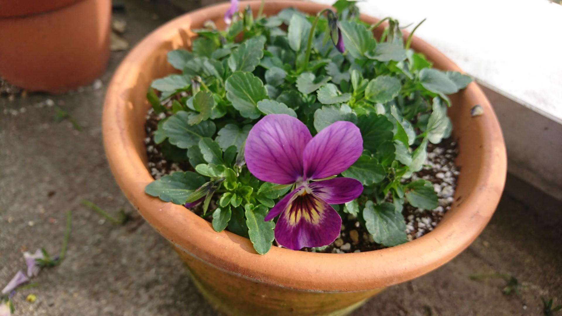 春を待つ小さな花芽たちと素敵なアソートカップ&ソーサー