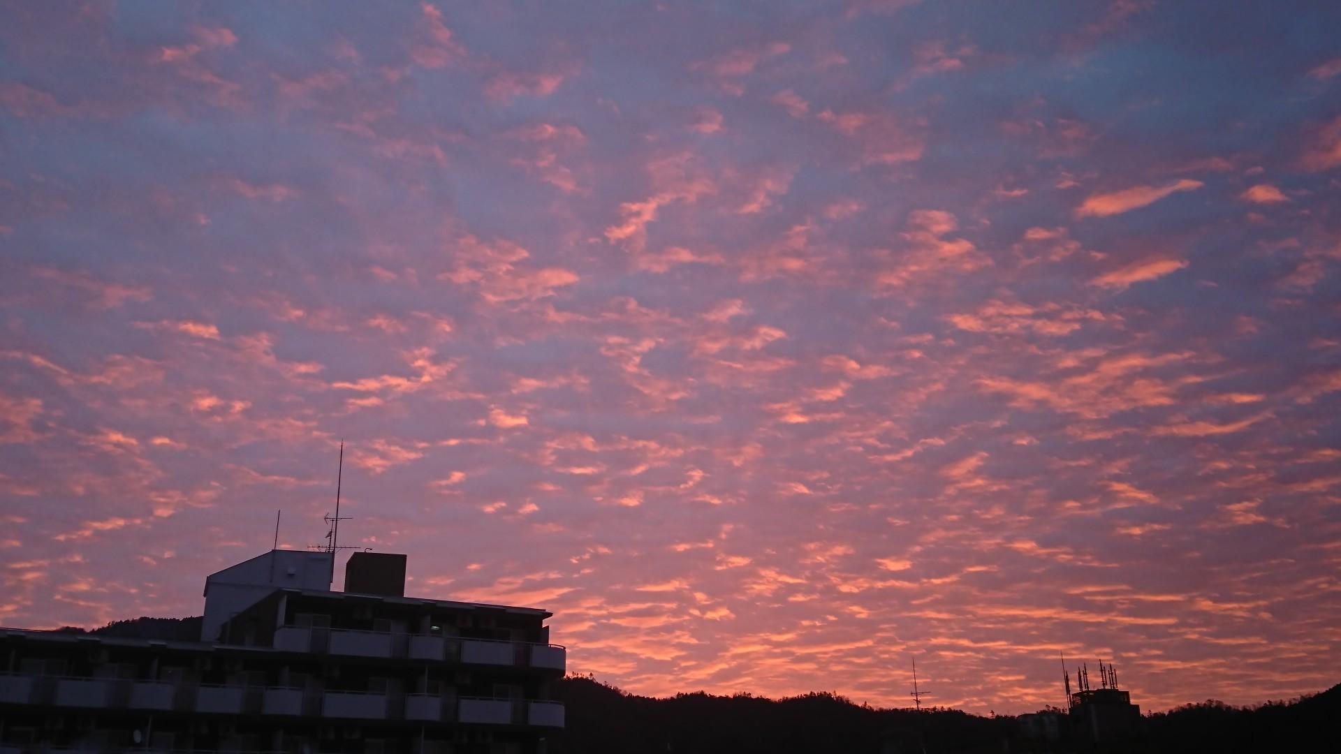 すごい朝焼け と 武田薬品の京都薬用植物園