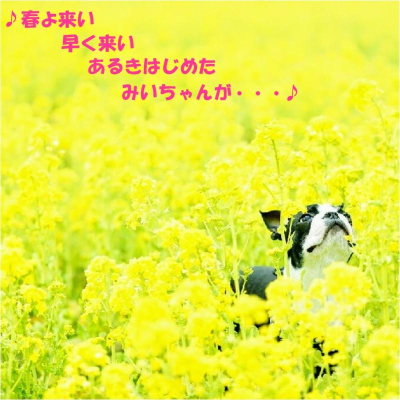 菜の花畑と犬