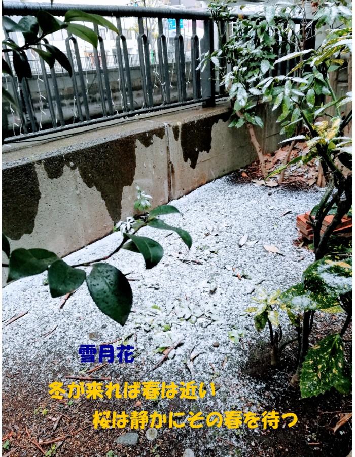 2019・2・9雪