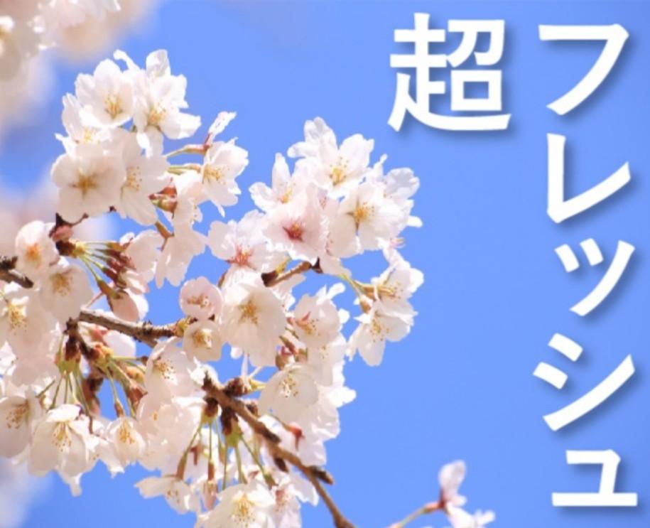 桜超フレッシュ1