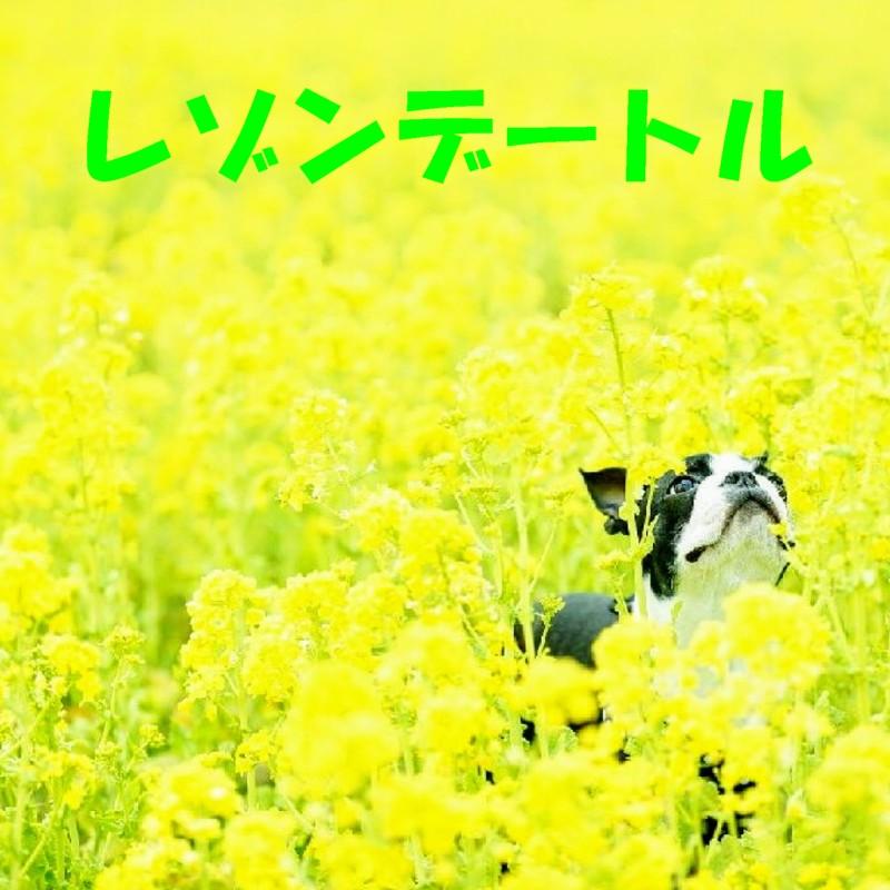 菜花畑と犬2