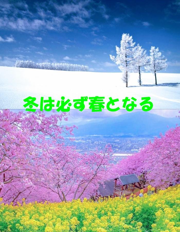菜の花と桜1