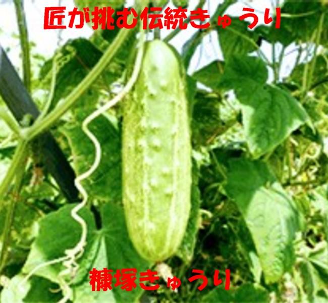 糠塚きゅうり1