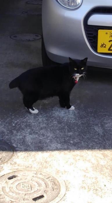 西尾邸手術済み猫