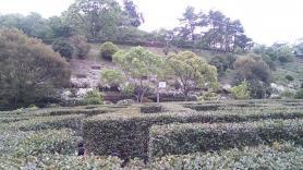 神山森林公園 イルローザの森 生垣迷路 うさぎ地点
