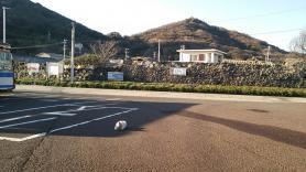 女木島と猫