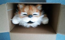 笑う!猫田課長 箱入り猫