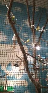もふもふふれあい動物園 鳥ゾーン