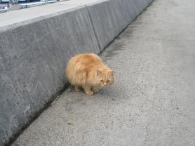 男木島のかわいい猫