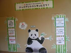 王子動物園 ジャイアントパンダのひみつ