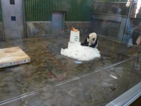 王子動物園 タンタンの24歳誕生日1