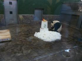 王子動物園 タンタンの24歳誕生日2