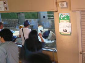 王子動物園 タンタンの24歳誕生日4