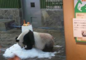王子動物園 タンタンの24歳誕生日5
