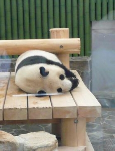王子動物園 タンタンの24歳誕生日 寝てる2
