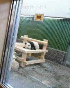 王子動物園 タンタンの24歳誕生日 寝てる4
