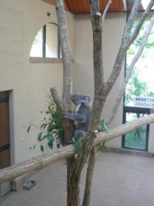 王子動物園 起きてるコアラ