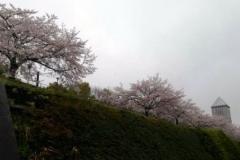20190410sakura.jpg