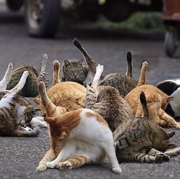 catslegs.png