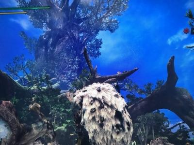 天気のいい古代樹