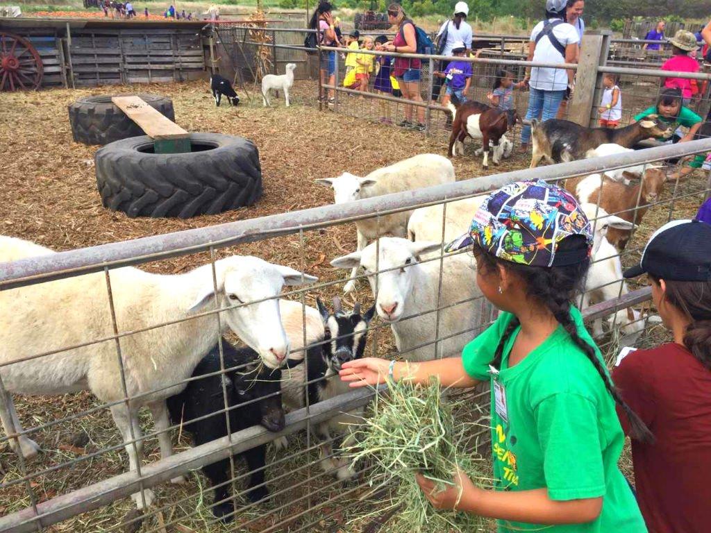 Girl-Feeding-Goats-Waimanalo-Country-Farm.jpg