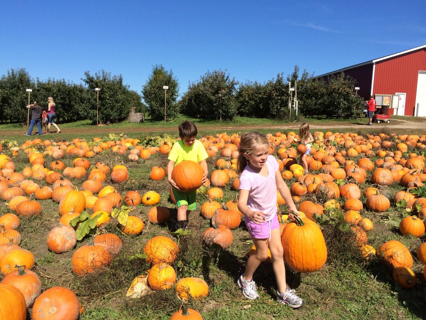 Joe-Holzka-Community-Garden-Pumpkin-Festival-1.jpg