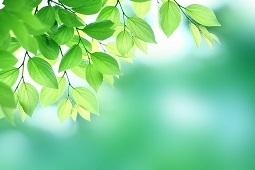 新緑のはっぱ3